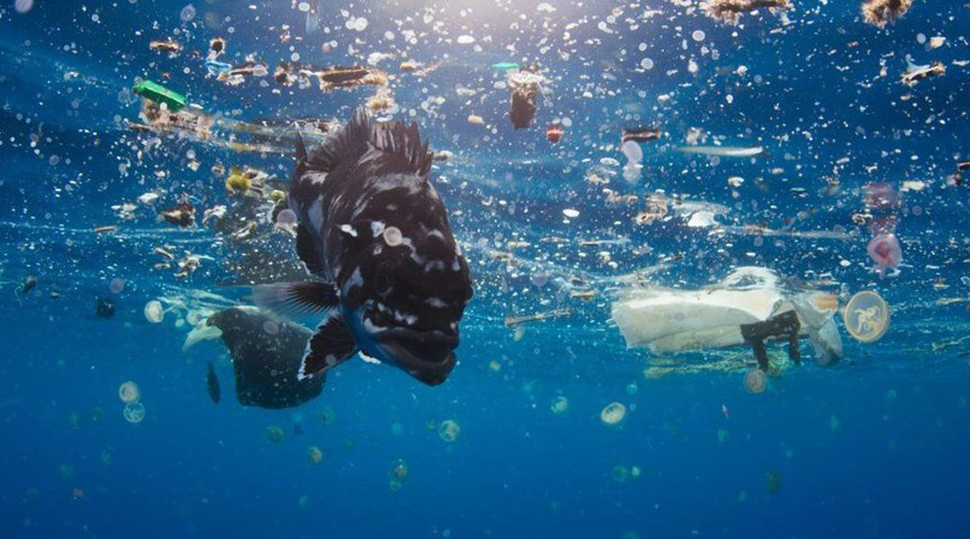 What is Plastic Really Doing to Our Ocean?