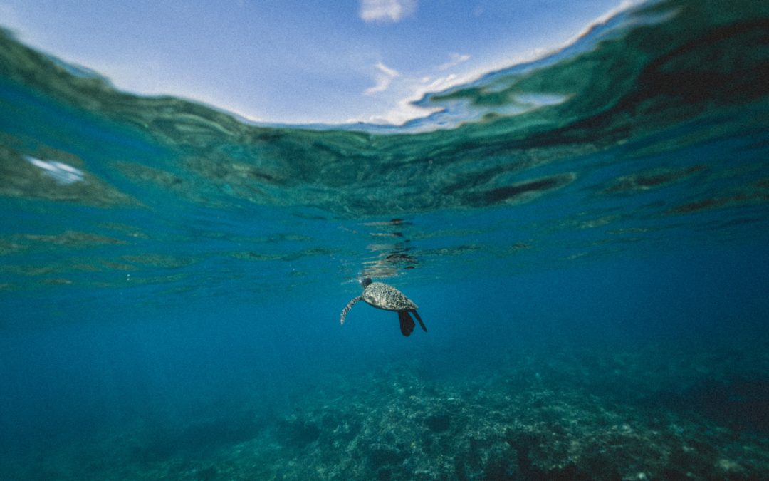 What is Going on with Ocean Acidification?